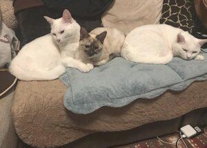 橘ひと美のペットの猫が可愛い!家族について