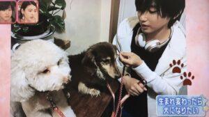 道枝駿佑の3匹の愛犬の名前や画像、犬種などプロフィールまとめ!