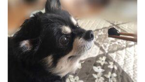 加藤史帆の家族構成は3姉妹と父と母!愛犬の黒豆の画像